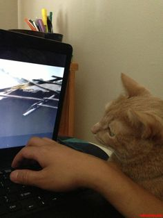 My Cat Likes To Watch Movies With Me - http://cutecatshq.com/cats/my-cat-likes-to-watch-movies-with-me/
