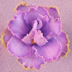EK Sky Azure - The Violet Barn - African Violets and More
