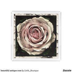 beautiful antique rose