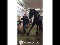 Танцы с конем