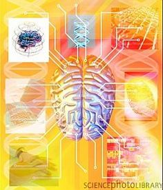 Study Finds High Brain Integration in Top Performers