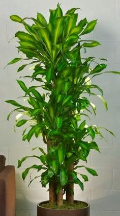 Indoor Plants Online Order Trees Hanging Potted Orchid Delivery Plant House