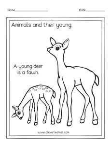 Baby animals coloring page preschool worksheets. A young deer is called a  fawn. | Preschool coloring pages, Baby animals, Animal coloring pages