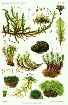 мох moss