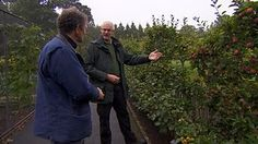 Out of media player. Press enter to return or tab to continue. Growing apples as espaliers DURATION: 02:45 If you fancy growing some apples in your garden but have ruled it out due to lack of space, then think again. Growing them as espaliers along a fence or wall may well be the answer. Monty Don talks to Jonathan Webster at RHS Rosemoor to find out more. Available since: Fri 27 Sep 2013