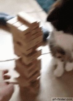 Cat Plays Jenga With Owner   Gif Finder – Find and Share funny animated gifs