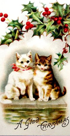 A glad Christmas from the cats