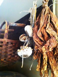 dried sunflowers and tobacco