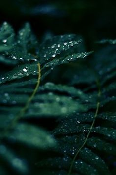 Dark Green Aesthetic, Nature Aesthetic, Aesthetic Gif, Aesthetic Collage, Terra Verde, Foto Macro, Slytherin Aesthetic, Shades Of Green, Color Inspiration