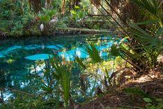 fern hammock is one of the most eerily beautiful springs in florida fern hammock springs   florida   pinterest  rh   pinterest