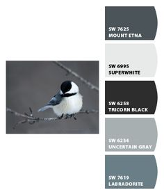 Chickadee paint colors by Sherwin-Williams