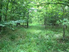Edwards, Hinds County, Mississippi land for sale - 45 acres at LandWatch.com
