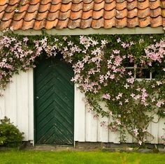 Movin' On Up - Vine Flowers - Bob Vila.... Flowering Climbers: 8 Cures for the Common Garden Grow your garden from ordinary to extraordinary with flowering vines that add a beautiful new level of interest to your landscape.