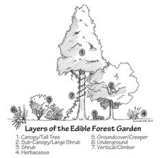 Temperate Climate Permaculture.  Comprehensive plant descriptions categorized by layers of the edible forest.