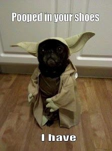 Hahahah oh.my.gosh. literally laughed out loud. Yoda.