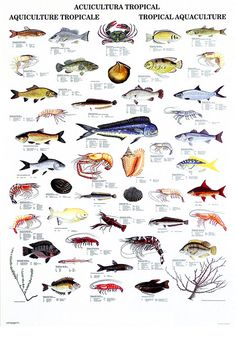 Name of fishes hawaiian reef fish guide types of fish for Hawaiian fish identification
