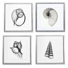 Shell X-Ray Photography | Williams-Sonoma
