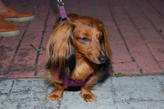 Dogs about town in Ipswich, MA. Local News, North Shore, Massachusetts, The Locals, Cute Animals, Dogs, Pretty Animals, Cutest Animals, Doggies
