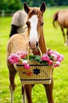 Awe, horse and a basket of flowers <3