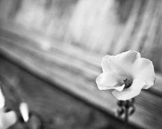 Signed fine art 8x10 photographic print Free by AulaniPhotography, $22.00
