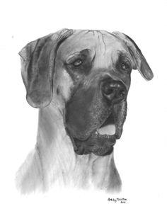 Great Dane - Dog Portrait Drawing - Unique & Lifelike Art by Talitha