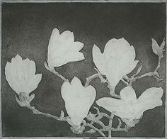 Magnolia (IB) - CHARLES DONKER  Dutch, (b. 1940)  Etching and aquatint, 2008, edition 15. 9 1/2 x 11 3/8 in. Signed and dated (April) in the plate.