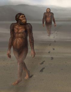 Leatoli Trail and Australopithecus afarensis by Karen Carr