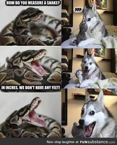 Funny pics memes and trending stories - Funny Husky Meme - Funny Husky Quote - How do you measure a snake The post Funny pics memes and trending stories appeared first on Gag Dad. Husky Humor, Funny Husky Meme, Funny Dog Jokes, Funny Shit, Dog Quotes Funny, Crazy Funny Memes, Really Funny Memes, Funny Relatable Memes, Pun Husky
