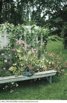 Sweet Birdhouse...on the garden bench.