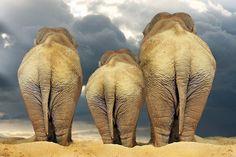 """Traveling Elephant Family "" by CarolM"
