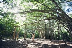 Rumi around trees