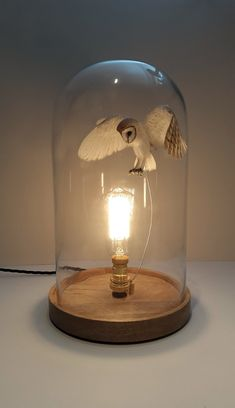 Paper and wood Barn owl in bell jar (wooden base) — Paper&wood