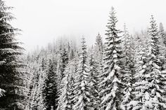 thursdays-at-the-coffeeshop { rivers and roads } Winter Love, Winter Is Coming, Drarry, Whistler, Rivers And Roads, The Ancient Magus Bride, Donia, Vail Colorado, She Wolf