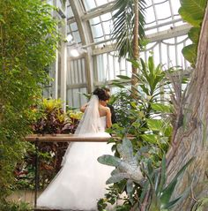 You can use the Imperial Butterfly House as a venue for weddings etc. Butterfly House, Palace, Vienna, Wedding Dresses, Butterflies, Weddings, Google Search, Bride Gowns, Wedding Gowns