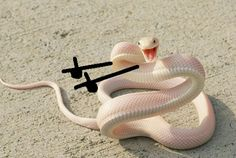 People Are Doodling On Snake Pics And The New Scenarios Are Hilarious Pics) - Quick 5 minutes DIY Ideas Funny Photos Of People, Funny Pictures, Funny Images, Cute Funny Animals, Funny Dogs, Pretty Snakes, Cute Reptiles, Cute Snake, Animal Memes