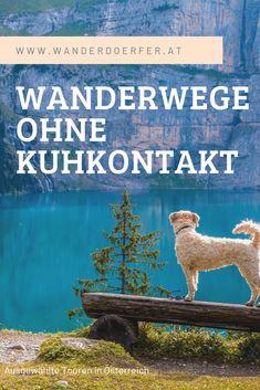 Wandern mit Hund ohne Kuhkontakt. Ausgewählte Touren von www.wanderdoerfer.at #wandernmithund #hundeimurlaub #hundeinösterreich #berge #wandern #wanderurlaub #hunde  #wanderwege #wanderninösterreich #wanderuralub #ausflugsziele #ausfluginösterreich #urlaubinösterreich My Big Love, Wanderlust, Pray, Movie Posters, Travel, Inspiration, Sport, Animals Dog, Pet Dogs