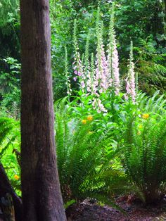 Wild flower seeds thrown over the barbed wire fence into a clear cut area led to these gorgeous Biennial Foxgloves.