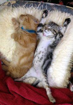 sleepy kittens  ねむねむ…