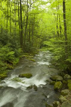 We love the Smoky Mountains!