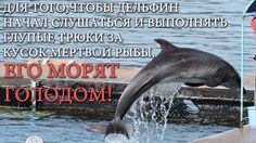 Russian law banning the keeping in captivity, operation, use in show business, abuse, fishing, hunting and killing of whales and dolphins. Equate dolphins representatives of another civilization, possessing equal rights with the man.