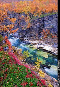 Autumn scenery in the Abisko-Canyon with Abiskojakka River, Sweden, Lapland, Abisko National Park