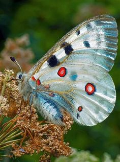Butterfly Painting, Butterfly Flowers, Butterfly Wings, Butterfly Chrysalis, Butterfly Species, Beautiful Bugs, Beautiful Butterflies, Types Of Butterflies, Cool Insects