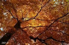 herrlicher Herbst