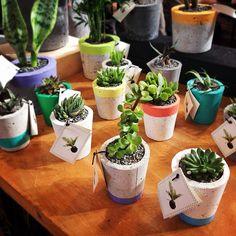 #popplant - @bespokepress- #webstagram