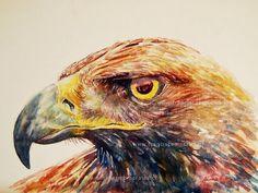 Águila watercolor - 30x40 cm Francisco Morales