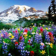 Primavera #Pirineo Aragones