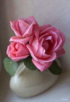 ♫ Roses ♫ ♥ X ღɱɧღ