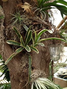 Air plants displayed in an old tree trunk.