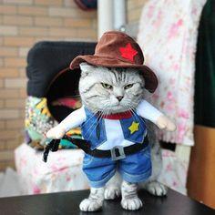 Sexy crazy cat lady costume