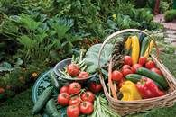 Garderning Hydroponic Gardening tips to maximize your garden production and grow more organic food. - Gardening tips to maximize your garden production and grow more organic food.